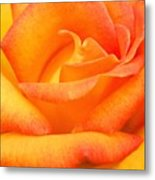 Red Gold Rose Metal Print