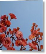 Red Gum Blossoms Australian Flowers Oil Painting Metal Print