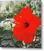 Red Gumamela  Metal Print