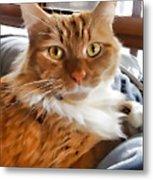 Red-haired Kitten Metal Print