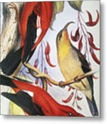 Red Hawaiian Honeycreeper Metal Print