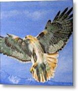 Red Hawk, 11x14, Oil, '07 Metal Print
