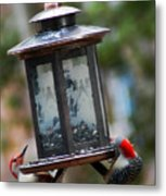 Red Head Wood Peckers On Feeder Metal Print