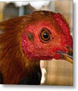 Red Headed Chicken Metal Print