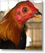 Red Headed Chicken Head Metal Print