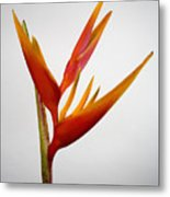 Red Heliconia Metal Print