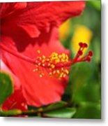 Red Hibiscus And Green Metal Print