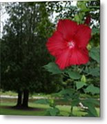 Red Hibiscus Highlights A Scene On The River Metal Print