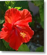Red Hibiscus II Metal Print