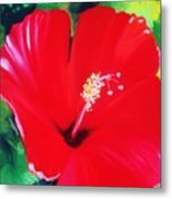 Red Hibiscus Metal Print
