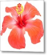 Red Hibiscus Vector Isolated Metal Print