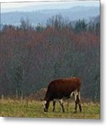Red Holstein Of The Hills Metal Print