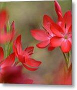 Red Hot Lilies Metal Print