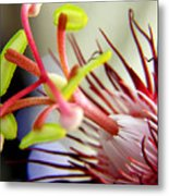 Red Hot Passion Metal Print