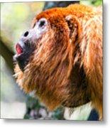 Red Howler Monkey Alpha Male Metal Print