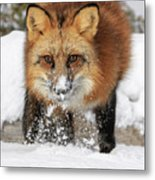 Red Hunter Metal Print