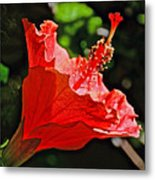 Red Hyacinth At Pilgrim Place In Claremont-california Metal Print