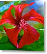 Red Hyacinth In Bourbon Resort Gardens Near Iguazu Falls National Park-brazil  Metal Print