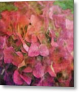 Red Hydrangea 2421 Idp_2 Metal Print