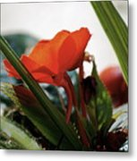 Red Impatiens Metal Print