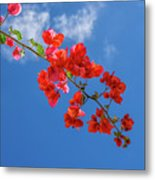 Red In The Sky Metal Print