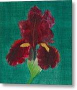 Red Iris Metal Print