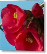 Red Is The Color Of My True Loves Lips Metal Print