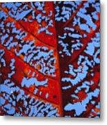 Red Kamani Tree Leaf Metal Print