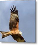 Red Kite Flying Metal Print