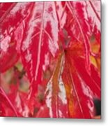 Red Leaf Abstract Metal Print