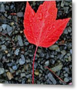 Red Leaf Almost Alone Metal Print
