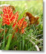 Red Leaf In Grass Metal Print