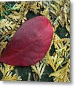 Red Leaf On  Arborvitae Leaves Metal Print