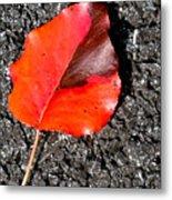 Red Leaf On Asphalt Metal Print by Douglas Barnett