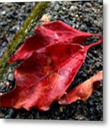 Red Leaves And Concrete Metal Print