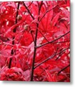 Red Leaves And Stems 2 Pd Metal Print