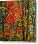 Red Leaves Of Autumn Metal Print