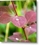 Red Leaves Plant Metal Print