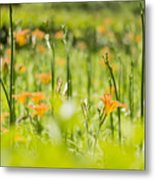 Red Lilium Metal Print