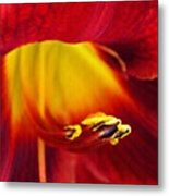 Red Lily Center 4 Metal Print