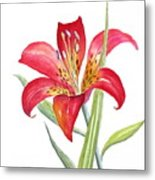 Red Lily Metal Print
