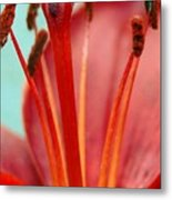 Red Lily Reach Metal Print
