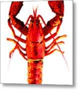 Red Lobster - Full Body Seafood Art Metal Print