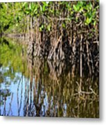 Red Mangrove Roots Reflections In The Gordon River Metal Print