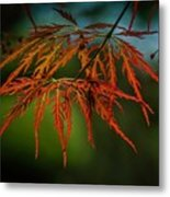 Maple Lace 2 Metal Print
