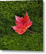 Red Maple Leaf  Metal Print