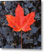 Red Maple Leaf On Black Shale Metal Print