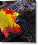 Red Maple Leaf on Old Log Metal Print