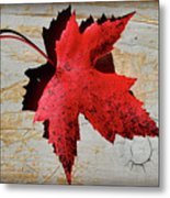 Red Maple Leaf With Burnt Edge Metal Print
