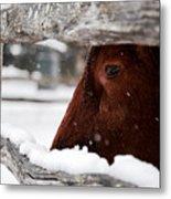 Red Milking Devon Snowflakes Metal Print